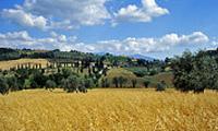 Crete di Siena