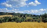 Le terre di Siena